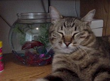 My cat Mew sleeping next to my fishbowl.  Click for a larger picture.